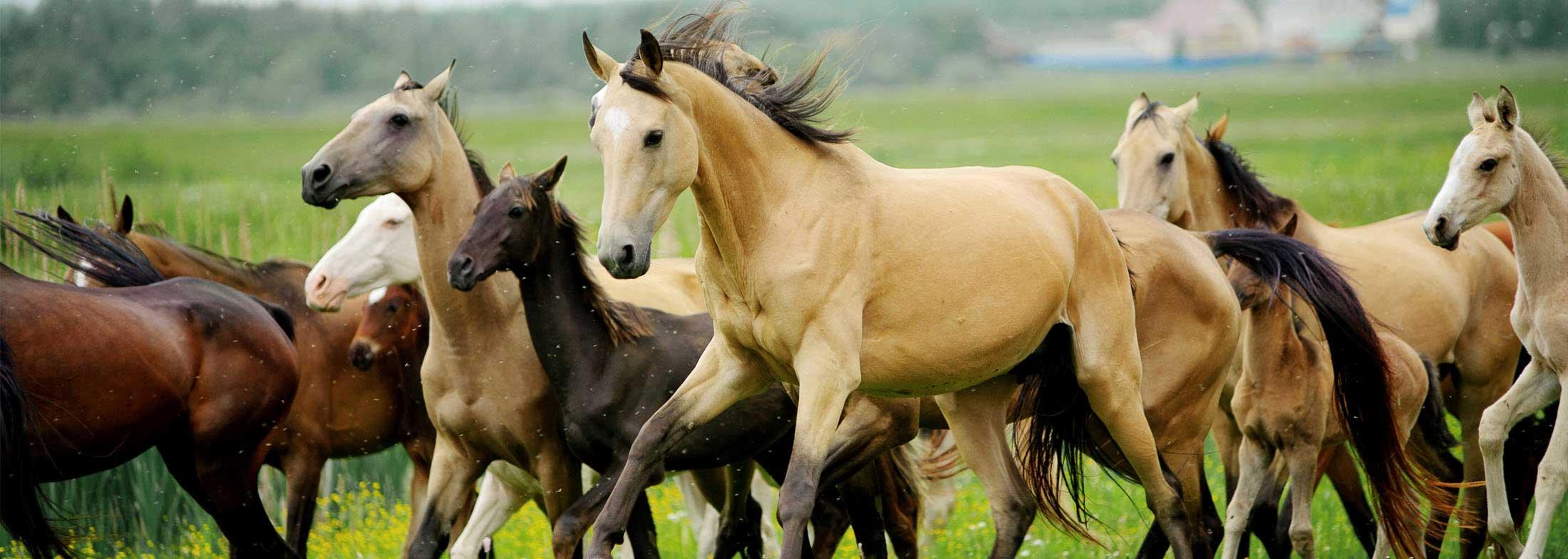equineslider1-1